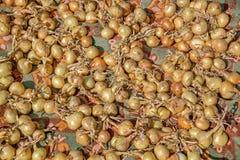 Ξεραίνοντας κρεμμύδια υπαίθρια Στοκ φωτογραφία με δικαίωμα ελεύθερης χρήσης