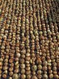 Ξεραίνοντας κρεμμύδια 2 Στοκ φωτογραφίες με δικαίωμα ελεύθερης χρήσης