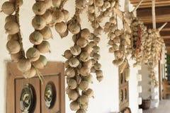 Ξεραίνοντας κρεμμύδια Στοκ Εικόνα