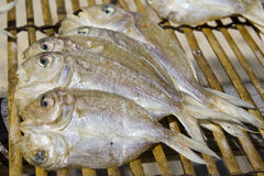 ξεραίνοντας ψάρια Στοκ φωτογραφία με δικαίωμα ελεύθερης χρήσης