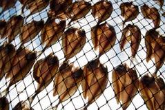 ξεραίνοντας ψάρια Στοκ εικόνες με δικαίωμα ελεύθερης χρήσης