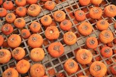 Ξεραίνοντας persimmon φρούτα στοκ φωτογραφίες