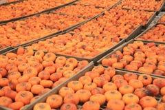 Ξεραίνοντας persimmon φρούτα στοκ εικόνες με δικαίωμα ελεύθερης χρήσης