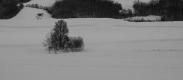ξεραμένα δέντρα Στοκ Εικόνες
