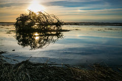 ξεραμένο δέντρο Στοκ φωτογραφία με δικαίωμα ελεύθερης χρήσης