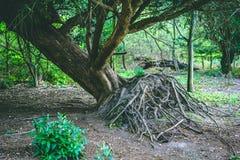 Ξεριζωμένο δέντρο στο δάσος που παρουσιάζει ρίζες στοκ φωτογραφία