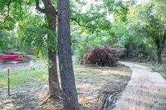 Ξεριζωμένο δρύινο δέντρο Στοκ φωτογραφία με δικαίωμα ελεύθερης χρήσης