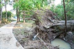 Ξεριζωμένο δρύινο δέντρο Στοκ εικόνα με δικαίωμα ελεύθερης χρήσης