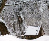 Ξεχασμένος ένας παλαιός που περιβάλλεται καλά από τα δέντρα στοκ φωτογραφία