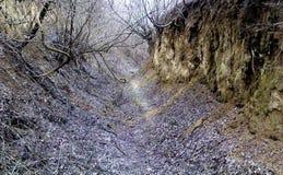 Ξεχασμένος ανατριχιαστικός δρόμος που καλύπτεται με τα παλαιά γκρίζα φύλλα στοκ εικόνα με δικαίωμα ελεύθερης χρήσης