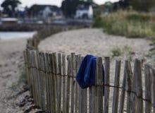 Ξεχασμένος κολυμπήστε τους κορμούς Στοκ φωτογραφία με δικαίωμα ελεύθερης χρήσης