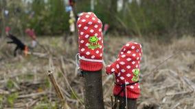 Ξεχασμένος στα δασικά γάντια στοκ φωτογραφίες