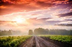 Ξημερώματα δασικό κρύψιμο στην ομίχλη δασική πορεία στοκ εικόνες