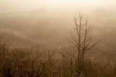 Ξημερώματα στον τομέα με την ομίχλη φθινοπώρου και τις πτώσεις του νερού στον αέρα Αποχρώσεις καφετιού Τίποτα δεν θα μπορούσε μακ στοκ εικόνες