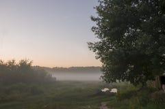 Ξημερώματα στον τομέα με την ομίχλη φθινοπώρου και τις πτώσεις του νερού στον αέρα Αποχρώσεις καφετιού Τίποτα δεν θα μπορούσε μακ στοκ εικόνα