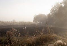 Ξημερώματα στον τομέα με την ομίχλη φθινοπώρου και τις πτώσεις του νερού στον αέρα Αποχρώσεις καφετιού Τίποτα δεν θα μπορούσε μακ στοκ εικόνες με δικαίωμα ελεύθερης χρήσης