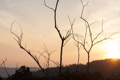 Ξηρά δέντρα με τους λόφους πίσω Στοκ Εικόνες