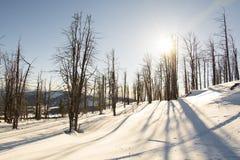 Ξηρά δέντρα Χιονώδης χειμώνας The Sun και σκιές Στοκ φωτογραφία με δικαίωμα ελεύθερης χρήσης