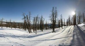 Ξηρά δέντρα Χιονώδης χειμώνας The Sun και σκιές Στοκ εικόνες με δικαίωμα ελεύθερης χρήσης