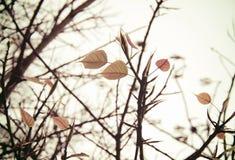 Ξηρά δέντρο και φύλλο με το αναδρομικό φίλτρο στοκ φωτογραφίες