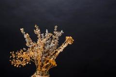 Ξηρά ανθοδέσμη πέρα από το μαύρο υπόβαθρο Ντεκόρ αποκριών Στοκ Φωτογραφίες