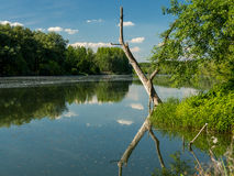Ξηρά αντανάκλαση δέντρων στην επιφάνεια του νερού Στοκ Εικόνα