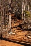 Ξηρά δασική επιφύλαξη σε Ankarana, αγριότητα της Μαδαγασκάρης Στοκ Εικόνα