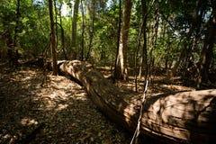 Ξηρά δασική επιφύλαξη σε Ankarana, αγριότητα της Μαδαγασκάρης Στοκ εικόνα με δικαίωμα ελεύθερης χρήσης