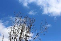 Ξηρά βασίλισσα Anne ` s δαντέλλα κάτω από το μπλε ουρανό Στοκ φωτογραφία με δικαίωμα ελεύθερης χρήσης