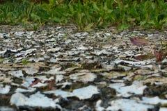 ξηρά γη ξηρασίας Στοκ Εικόνα