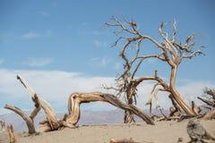Ξηρά δέντρα στην κοιλάδα θανάτου Στοκ φωτογραφία με δικαίωμα ελεύθερης χρήσης
