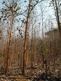 Ξηρά δέντρα στο ξύλο το φθινόπωρο στοκ εικόνα