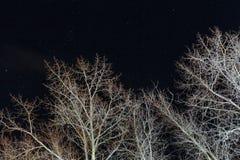 Ξηρά δέντρα τη νύχτα ενάντια στα αστέρια Στοκ εικόνα με δικαίωμα ελεύθερης χρήσης