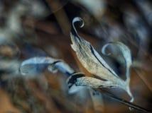 Ξηρά διάθεση θλίψης φύλλων φθινοπώρου στοκ εικόνες