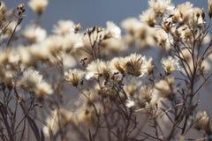 Ξηρά εγκαταστάσεις και λουλούδια φθινοπώρου στο λιβάδι Υπόβαθρο Στοκ Εικόνες