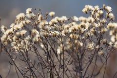 Ξηρά εγκαταστάσεις και λουλούδια φθινοπώρου στο λιβάδι Υπόβαθρο Στοκ Φωτογραφία
