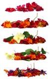 Ξηρά λεπτά λουλούδια που απομονώνονται στο λευκό Στοκ Εικόνες