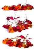 Ξηρά λεπτά λουλούδια που απομονώνονται στο λευκό Στοκ Φωτογραφία