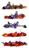 Ξηρά λεπτά λουλούδια στο λευκό Στοκ Φωτογραφίες