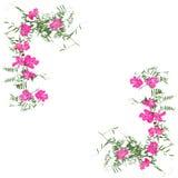 Ξηρά εφαρμογή λουλουδιών διακοσμήσεων γωνιών, μια ανθοδέσμη του γερανιού Στοκ Φωτογραφίες