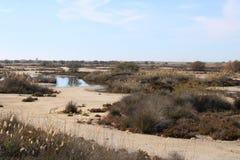 Ξηρά ζώνη με τις ξηρές εγκαταστάσεις στοκ εικόνες