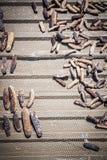ξηρά θάλασσα αγγουριών Στοκ Φωτογραφίες