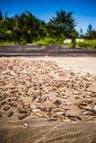 ξηρά θάλασσα αγγουριών Στοκ φωτογραφίες με δικαίωμα ελεύθερης χρήσης