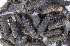 ξηρά θάλασσα αγγουριών Στοκ εικόνα με δικαίωμα ελεύθερης χρήσης