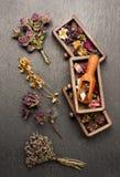 Ξηρά ιατρικά χορτάρια στα ξύλινα κιβώτια για το βοτανικό τσάι θεραπείας, Στοκ φωτογραφία με δικαίωμα ελεύθερης χρήσης