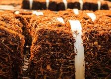 Ξηρά καπνίζοντας φύλλα καπνών Στοκ Εικόνες