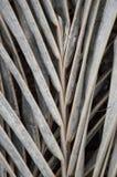 Ξηρά καρύδα laves στοκ εικόνες
