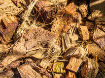 Ξηρά καρύδα spathe Στοκ Φωτογραφία