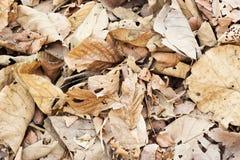 Ξηρά καφετιά φύλλα στο δασικό υπόβαθρο Στοκ εικόνες με δικαίωμα ελεύθερης χρήσης