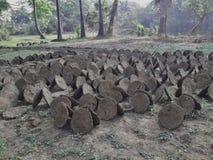 Ξηρά κοπριά αγελάδων κοντά σε μια επαρχία στοκ εικόνες